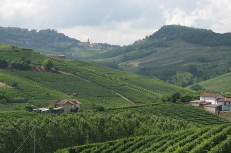piedmont italy wine