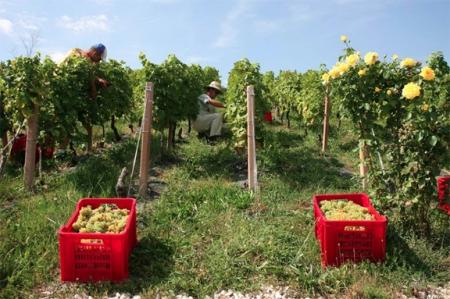 best italian wine austin texas